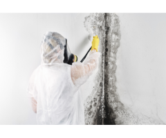 Professional Restoration Company for Black Mold Removal Services
