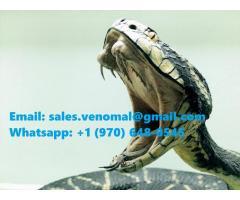 Buy Snake Venom, Scorpion Venom and Frog Venom